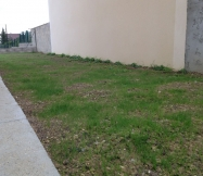 La mauvaise herbe a fait sont apparition.