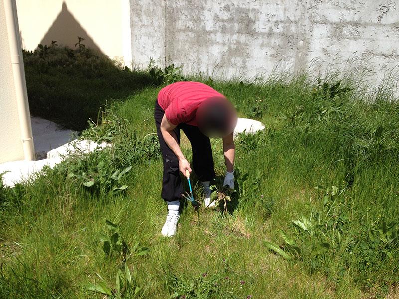 Pour bien se débarrasser d'une mauvaise herbe, il faut l'extraire du sol avec sa racine.