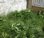 Les mauvaises herbes ont envahi tout le jardin !