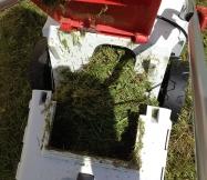 L'herbe est bien haute et la tondeuse en déborde.
