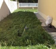 C'est sur le côté de la maison que l'herbe est la plus haute.