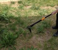 La mauvaise herbe est arrachée avec sa racine.