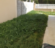Les mauvaises herbes, le liseron sont apparus.
