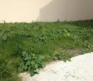Voici ce qui se passe quand on laisse trop pousser l'herbe de sont jardin !