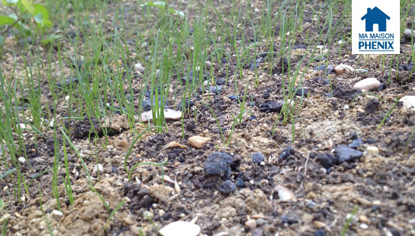 herbe terrain Maison Phénix