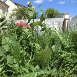 Jardin : arrachage de mauvaises herbes