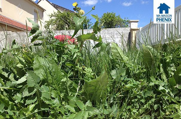 Jardin arrachage de mauvaises herbes ma maison phenix for Mauvaises herbes du jardin photos