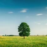 Fiche pratique : comment choisir son terrain pour faire construire sa maison