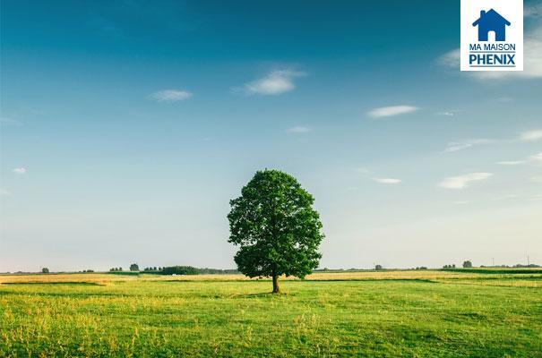 Maison Phénix : comment choisir spn terrain ?