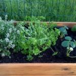 Jardin potager Maison Phénix